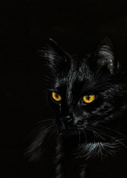danguole black cat