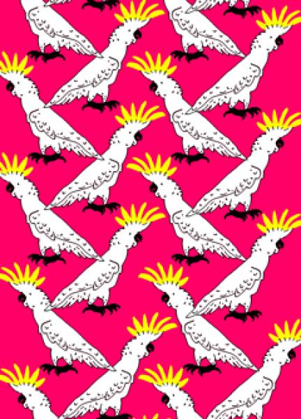 filippella parrot