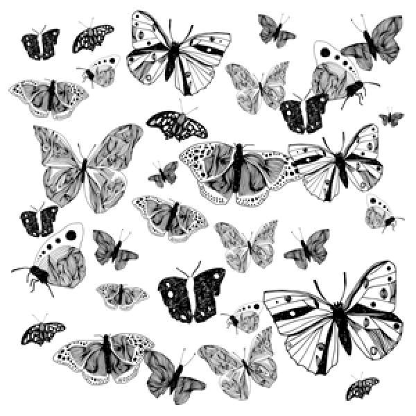 nava butterfly